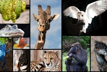 It's a Zoo Out There / Zoos, aquariums, and other animal adventures.