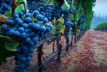 J'aime Vin (love wine) / by Lesley Thomson