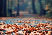 fall / by Carrie