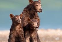 Bears / by Janet VanBuskirk