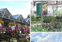 Sargent's Garden Center / Since 1929, Sargent's has been beautifying Red Wing and surrounding areas! Satisfaction runs deep in the roots of every plant grown and in every customer served.