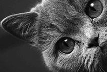 без кота и жизнь не та...