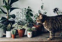 • Plants! •
