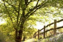 SPRING / flowers blooming, meadows, nature, etc