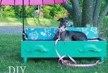 DIY Dog Projects / DIY Dog projects including no-sew beds, toys, and DIY doggy / puppy clothing! Courtesy of ROMP Italian Greyhound Rescue