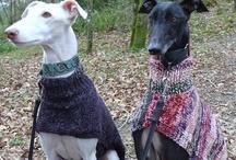 jerseys de punto para galgos  - knit sweaters for greyhound / se hacen a medida más información en galgosypunto@gmail.com o en la web http://jerseysdepuntoparagalgos@blogspot.com.es