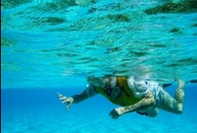 Snorkeling / Coral reefs, clear blue waters, tropical fish, barracudas, turtles, sea lions, Caribbean waters.