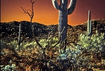 Arizona, USA / The beauty of the desert, cactus, Indian monuments, the Grand Canyon, desert animals and more.