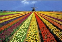 Netherlands / Amerstand, capital of Netherlands, Holland, Great Beaches, Tulips and more.