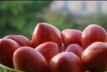 Archivio delle coltivazioni / Produzione realizzata in agricoltura naturale, utilizzando sementi biologiche e biodinamiche.