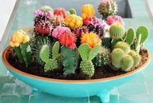 Cacti Crazy / Gift ideas and diy inspiration for the cactus lover.