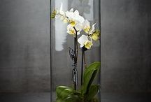 Orchid Lover / Gift ideas and party inspiration for the orchid lover.