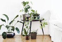 Slaapkamer ❥ Botanisch / Groen, planten en veren
