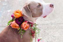 Pets&Events