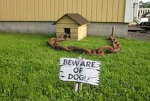 Dog Days / Funny dogs