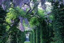 Gardens and flowers / Beautiful gardens and flowers