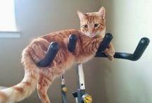 kitty larf  3