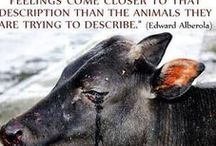 vegan non dairy / Cows must have babies to produce milk. The cow's babies are killed for veal. Then cows are machine milked 24/7, exhausted and exploited, cows are injured - blood comes from their breasts. The machines suck out every single drop of milk, blood and pus. Cow's lifespan is 20 years, but in the dairy industry they stop being productive at 5 years. They are so destroyed  inside they can't continue. Then they are sent to the slaughterhouse where they have their throats slit and are cut into pieces.