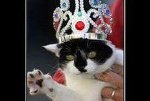 kitty larf 5 / Pin freely, no limits