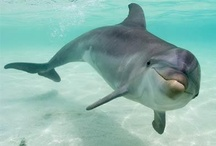 Animals ✿ Dolphins