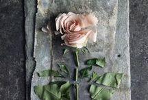 Roses / Ros - a, Ros - ae, Ros - ae, Ros - am, Ros - a, Ros - a