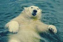Polar Bear 北極熊 / by jay chen