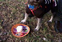 Fiesta canina / Chucho party