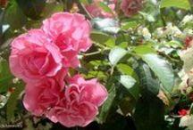 Natureza e flores