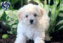 Mesha / My dog