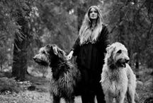 Irish Wolfhounds / by Katherine Akin