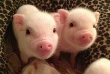 Cute ickle animals / Aaaaaaaaw, cuteness overload!