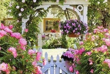 Garden-Plants, Flowers & Ideas / by Cheryl Northedge