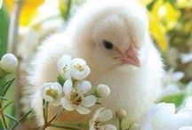 Easter & Spring / by Cheryl Northedge