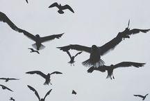 birds ♥