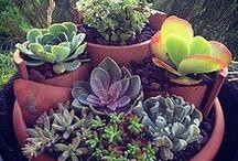 Gardening Ideas / by Lisa C