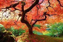 Roční období - Seasons / Nature Jaro, léto, podzim, zima Spring, summer autumn winter