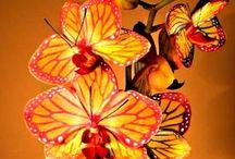 --ORCHIDS--