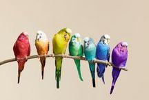 El color de la fauna 2 / Color en la naturaleza