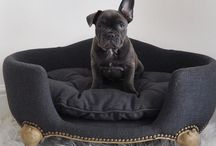 Blue Side of Style / My french bulldog Blue #bluesideofstyle