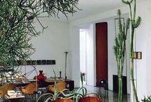 + Indoor Plants