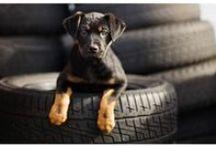 Adorable Pets / by DigiscrapBoutique.com