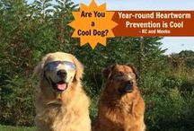 Ticks, Fleas, Heartworms and Other Parasites! / Information and products to keep your dog and cat safe from external and internal parasites!  Products that the doctors at LItchfield Veterinary Hospital recommends to keep your dog and cat healthy.