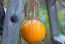 Blogging with Apples Garden
