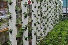 Ogród - donice i grządki