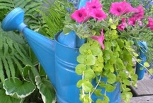 Container Gardening / by Lois