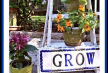 Garden / Information on Gardening
