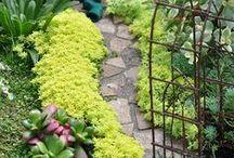 Gardens Miniature