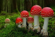 Mushrooms & toadstools / by Jo Russell