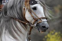 A LOVE FOR HORSES !!