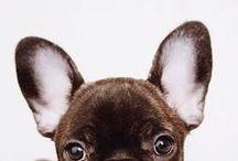 D O G G O / Puppies
